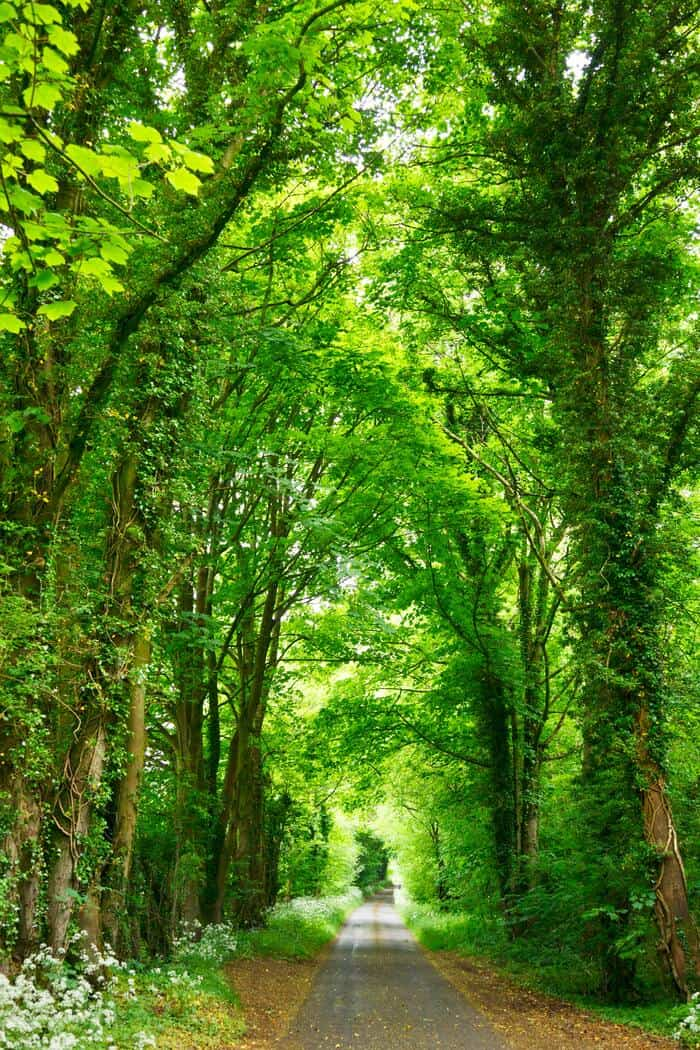 Green Candle Meaning - Lush Forest Path