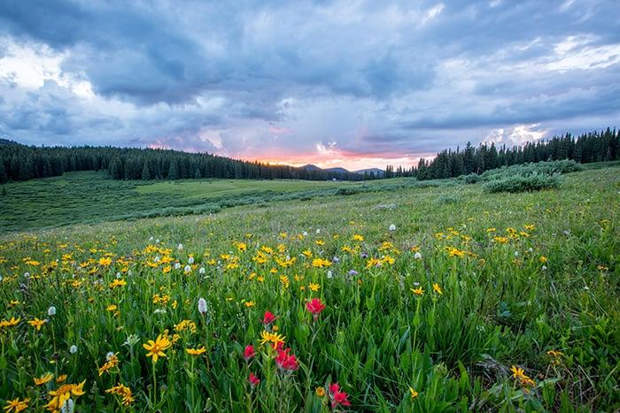 Ostara - dawn over green meadow