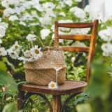 Litha - Chair with Daises and Glass ofLitha - Chair with Basket of Daises and Glass of Wine in Garden Wine in Garden